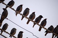 flock-3950847
